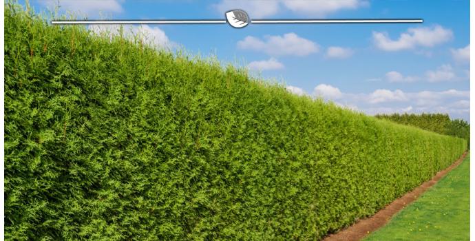Abgestorbene Pflanzen in der Koniferenhecke ersetzen